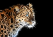Fractal Image Of A Wild Leopard With Blue Eyes On A Contrasting Black Background