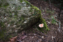 The Mushroom Grows In A Forest...