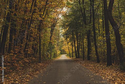 Foto auf Leinwand Grau Verkehrs Beautiful autumn landscape