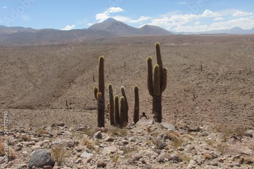 Fotografering  Bolivia Chile Deserto Beleza Turismo
