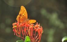 Butterfly In Flower Garden