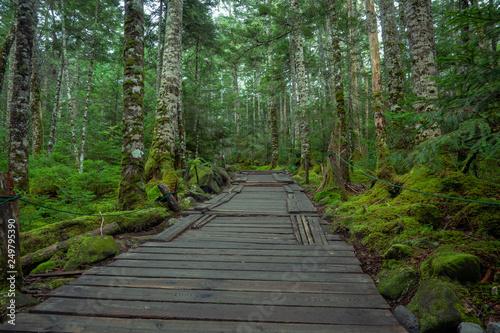 Yachiho moss forest