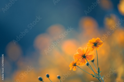 Fotografia Close up nature view of yellow flower under sun light