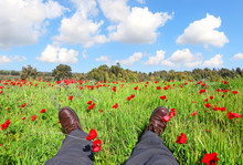 Spring Red Flowers Blossom. Wild Anemones Blooming On Green Meadow. Traveler Has A Rest On A Flowering Glade. Hiker 's Man Feet In Leather 's Boots. Beautiful Sunny Day Outdoor