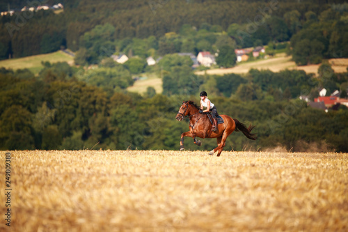 Fotografie, Obraz Horsewoman with horse galloping on a stubble field in summer photographed from the front from some distance