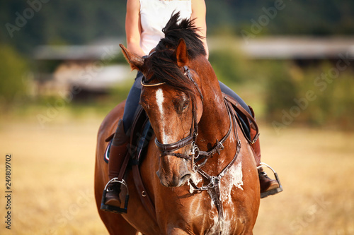 Photo  Horse with rider in close-up