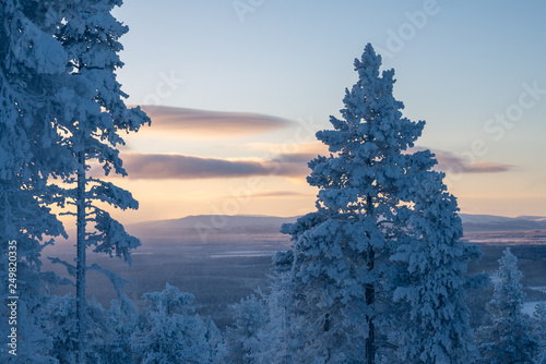 Photographie  Snow covered trees with sunset landscape in Levi ski resort in Kittilä, Finland