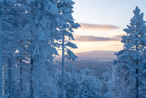 Snow covered trees with sunset landscape in Levi ski resort in Kittilä, Finland Tableau sur Toile