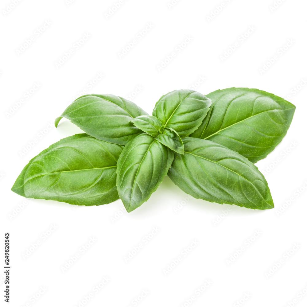 Fototapety, obrazy: Fresh sweet Genovese basil leaves isolated on white background cutout.