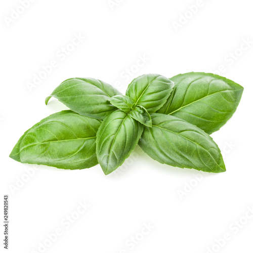 Fotomural  Fresh sweet Genovese basil leaves isolated on white background cutout