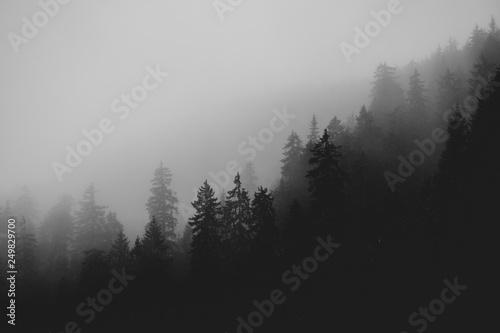 Fototapety, obrazy: Nebelmeer im Schwarzwald