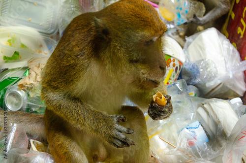 Photo una macaca mangia la spazzatura
