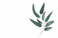 Eucalyptus Leaves On White Background. Pattern Made Of Eucalyptus Branches. Flat Lay, Top View, Copy Space