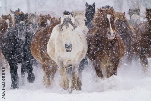 фотография  雪の中走る馬