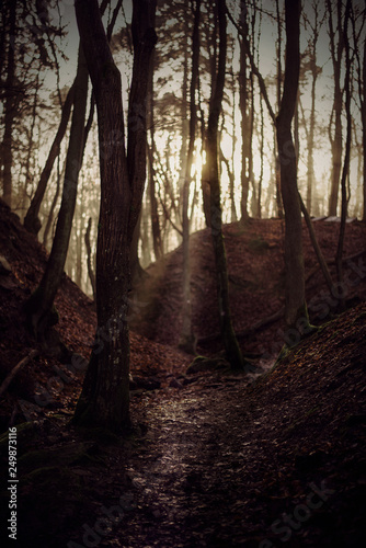 Las i słońce