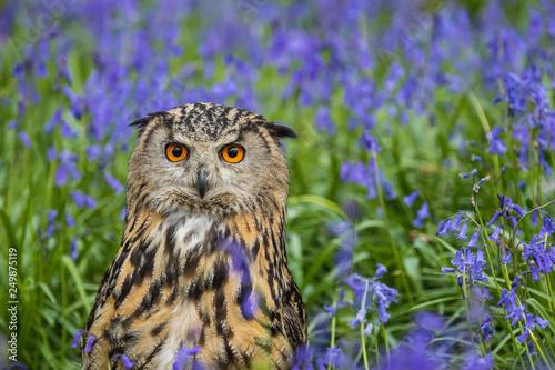 Montage in der Fensternische Eulen cartoon Eagle Owl (Bubo bubo) or Horned Owl in Bluebells