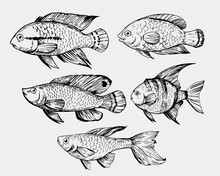 Sketch Of Exotic Fish. Hand Drawn Illustration Converted To Vector