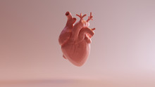 Pink Porcelain Anatomical Heart 3d Illustration 3d Render