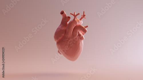 canvas print motiv - paul : Pink Porcelain Anatomical Heart 3d illustration 3d render