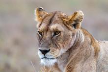 Safari En Serengeti
