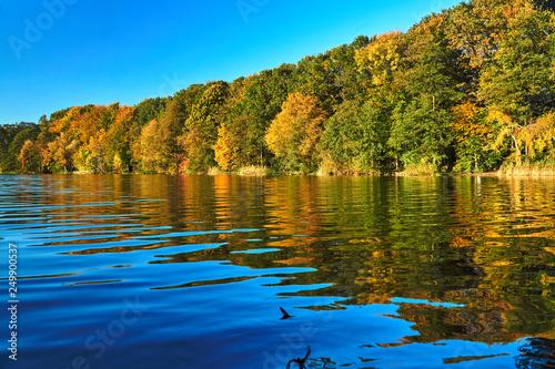 Kolorowe drzewa na jeziorze jesienią w Poznaniu ..