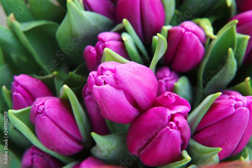Poster Tulp bouquet of pink tulips