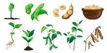 Soybean Icons Set. Cartoon Set...