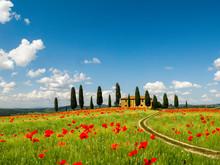 Poppies In Field, Tuscany, Italy