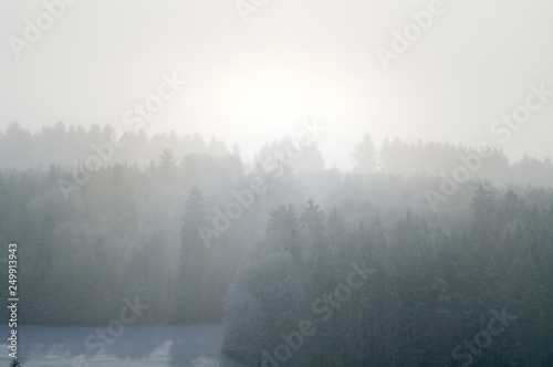 Montage in der Fensternische Weiß forest landscape on misty winter day