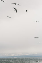A Flock Of Seagulls Flying In ...