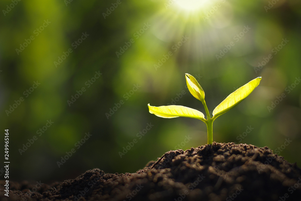 Fototapeta growing young plant in garden and morning light