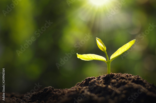 Spoed Foto op Canvas Planten growing young plant in garden and morning light