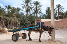 Resting Donkey With Cart Tied To Pillar On A Narrow Medina Street In Tunisia, Africa