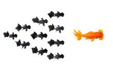 Group Of Small Black Goldfish ...