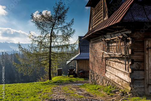 Fototapety, obrazy: Wooden chalet with young tree, Poland, Tatra