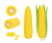 Corn Cob Realistic. Yellow Can...