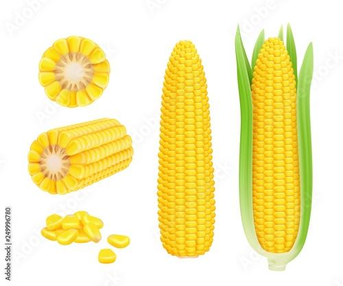 Canvas Print Corn cob realistic