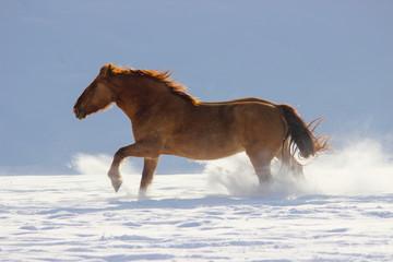 a big heavy horse galloping through the snow