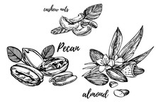 Almonds, Pecan And Cashew Nuts Sketch Illustrations. Hand Drawn Illustrations Isolated On White Background.