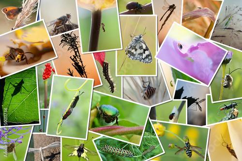 Photo  pêle-mêle de photos d'insectes