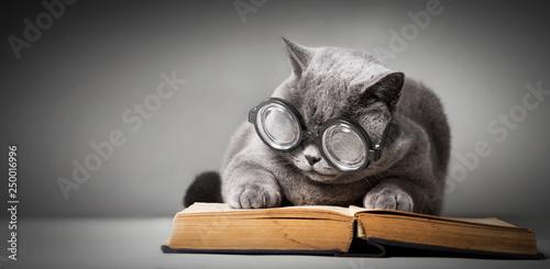 Fotografie, Obraz  Funny cat in big glasses reading book.