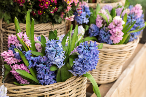 Papiers peints Jardin Springtime. Beautiful hyacinth flowers in blue and pink colors in a wicker baskets for sale in a flower garden shop.