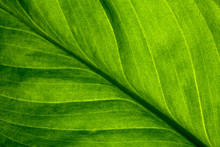Abstract Green Striped Nature ...