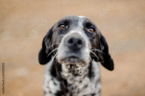 Poster Chien Black and white homeless dog looking at camera