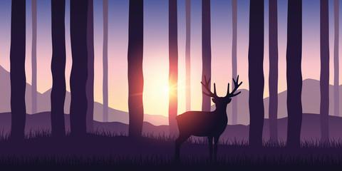 lonely wildlife reindeer in...