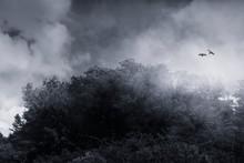 Birds Flying Over Peak Shroude...