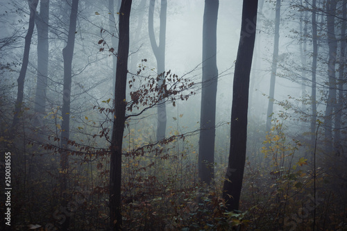 late autumn forest landscape, trees in fog and fallen leaves