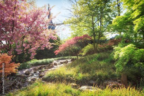 Photo  Spring landscape. Nature in blossom