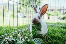 Cute Little Bunny Is Eating Sa...