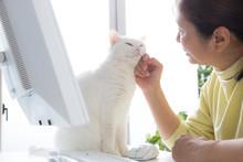 我が家の白猫